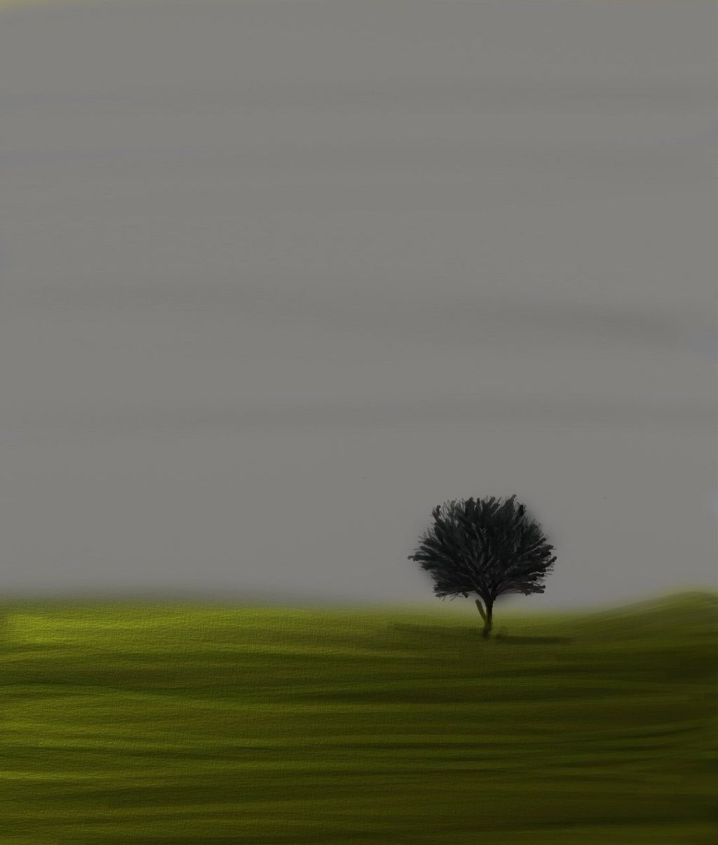 #lonelytree #solo #alone #tree #scenery #openview #green #field #nature #growth #sky #graysky #beauty #bare