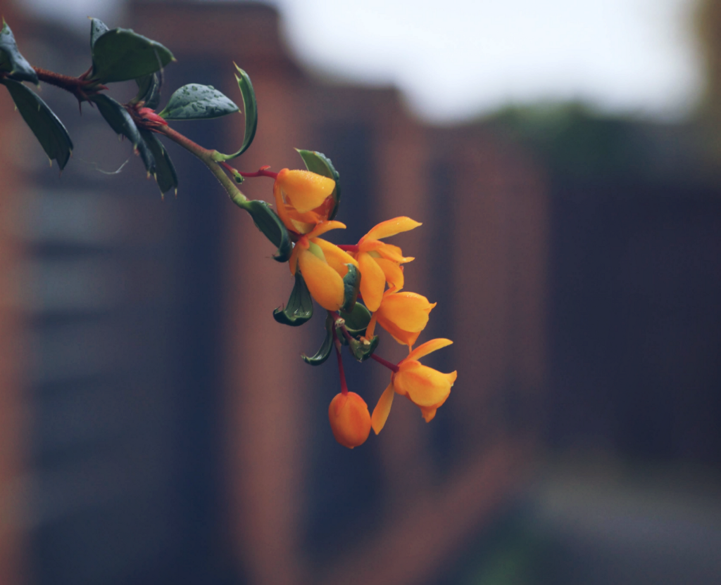 Just liked these yellow flowers #nature #flower #flowerpower #closeup  #freetoedit