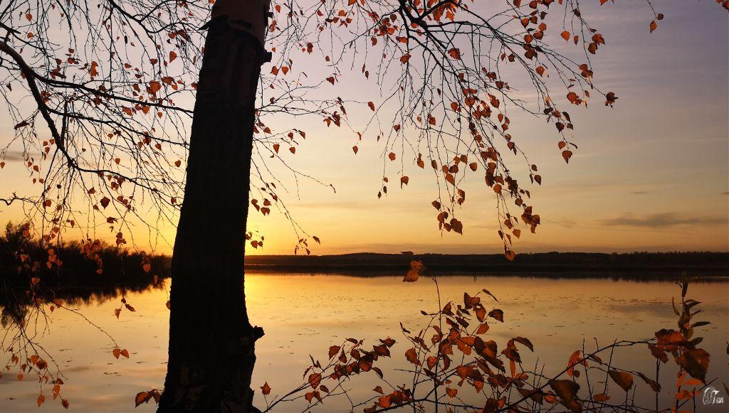 #sunset #tree #leaves #lake #naturephotography