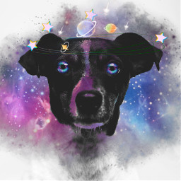 freetoedit dog galaxy headband crown srcgalaxycrown galaxycrown