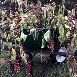 myphoto wheelbarrow garden