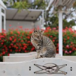 freetoedit catsofpicsart cat photooftheday catslover