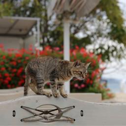 freetoedit cat catsofpicsart catsphotography photography