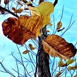 interesting nature leaves fallleaves