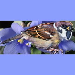 freetoedit remixedwithpicsart naturephotography sparrow bird
