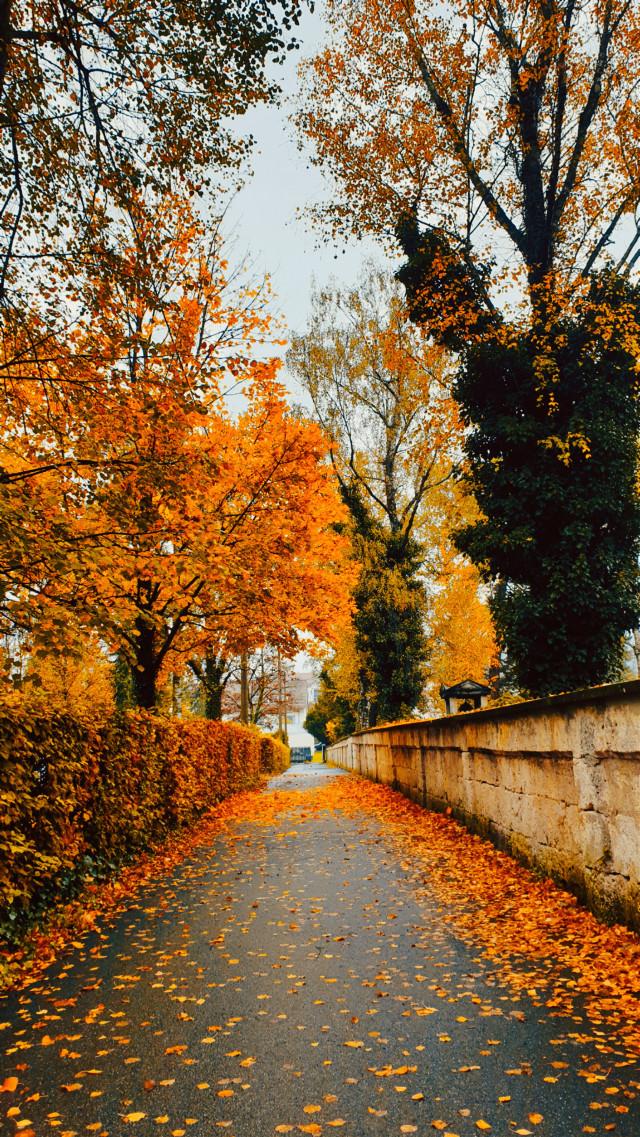#atumn2019 #leavesfalling #naturelovers #moody  #amateurphotography #hobbyphotograph