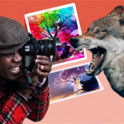 freetoedit photographer wolf ircpeachquartz peachquartz