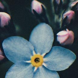 nature flowers wildflowers autumnflowers tinyflowers freetoedit