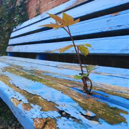freetoedit blue bench plant small