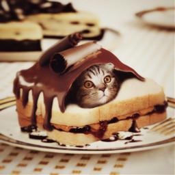 freetoedit dessert cake madewithpicsart chocolate
