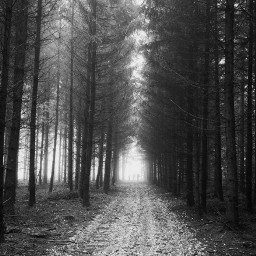 freetoedit blackandwhite pathway forrest people