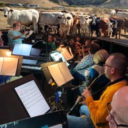 freetoedit orchestra musicals musicislife oklahomathemusical