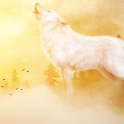 freetoedit wolf sun jungle morning