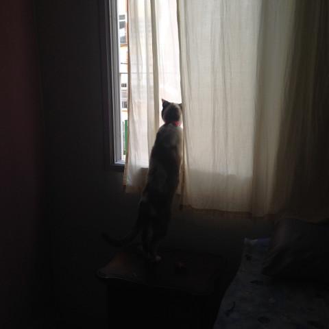 #gato,#janela,#window,#cat,#challenge,#pcsomeoneinawindow