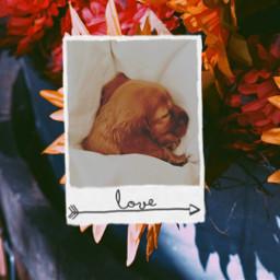 freetoedit polaroid polaroidphoto dog cute