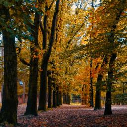 trees nature autumn autumnleaves photography myphoto mv3 freetoedit
