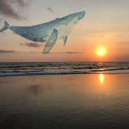 freetoedit sunset whale madewithpicsart bali