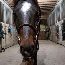 pony gibson horse november