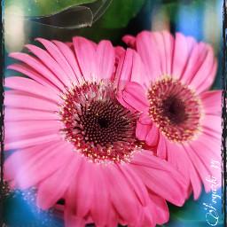 freetoedit nature loreak flores flowers