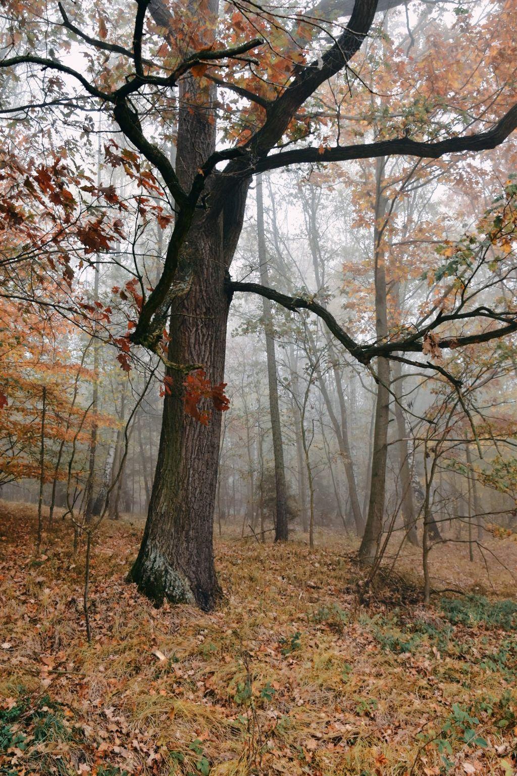 #freetoedit #nature #trees #fog