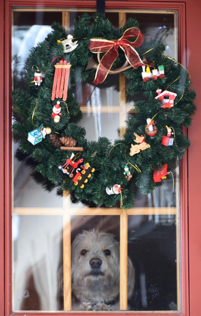 Santa? #Someoneinthewindow#instagram#instagramers#instagrammers#picsart#picoftheday#nikon#nikonusa#nikonus#dog#dogs#pet#pets#window#adorable#picoftheday#canon#canonus#canonusa
