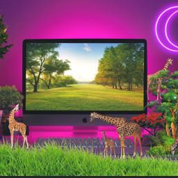 freetoedit computer desk giraffe mini