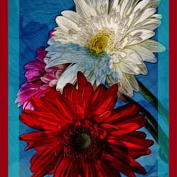 freetoedit myedit flowers natura