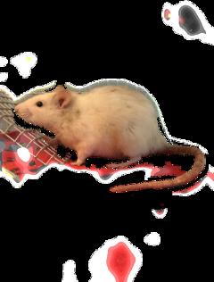rat freetoedit