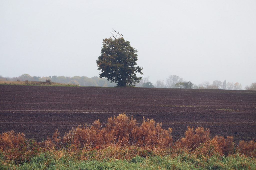 Just liked this view #nature #tree #landscape #lonelytree #dodgereffect  #freetoedit