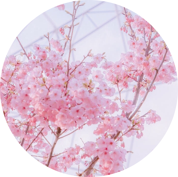 #flowers #flower #pink #pinkaesthetic #pinkaestheticstickers #cherryblossom #tree #aesthetic #freetoedit