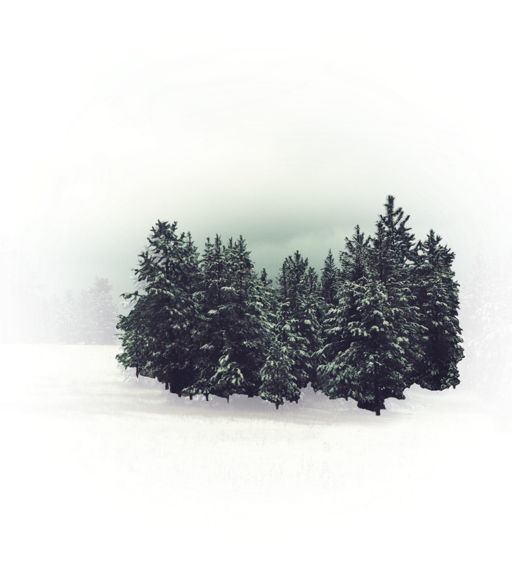 #aesthetic #nature #pinetrees #winter #snow Made from the photography of this weeks Artist of the Week gallery of @aleda_bandita 🌲🌲🌲