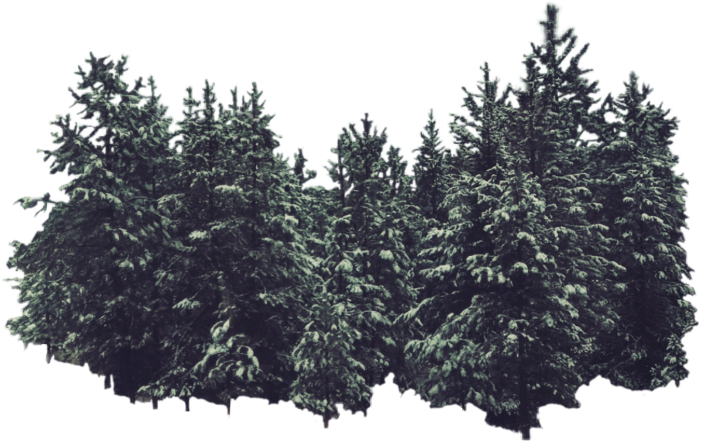 #pinetrees #winter #nature #snow #nature from the Artist of the Week gallery of @aleda_bandita