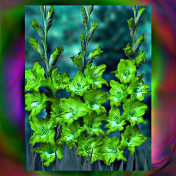 freetoedit bright colorful hueeffect flowers
