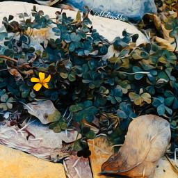 freetoedit yellow flower leaf atumn