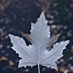 nature leaf closeup morningwalk freetoedit