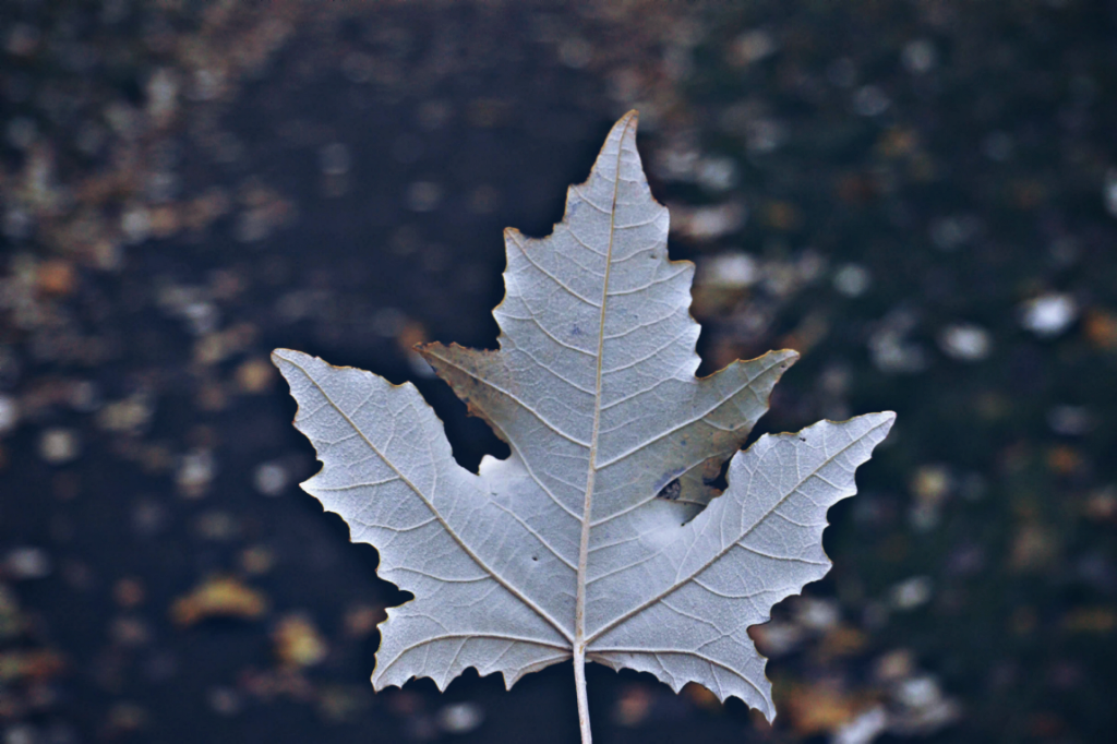 Just liked this leaf #nature #leaf #closeup #morningwalk  #freetoedit