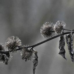 freetoedit naturephotography macro naturelovers raindrops