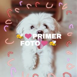 perrito🐶💞 primerafoto freetoedit perrito