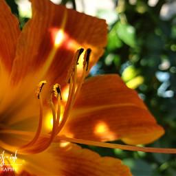 freetoedit flowers colorful macro macrophotography