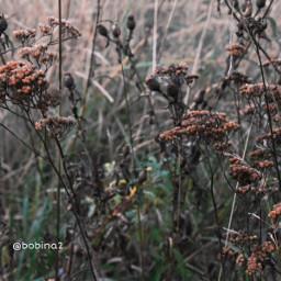 freetoedit nature wildflowers myphoto