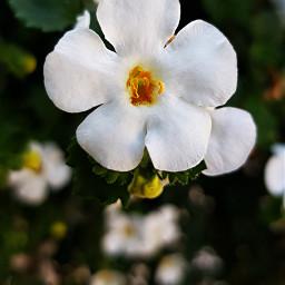 freetoedit flower myclick photography