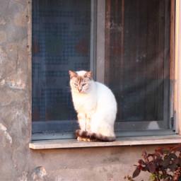 freetoedit gato ventana window beautiful pcsomeoneinawindow