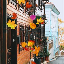 freetoedit fallleavesbrush autumn weather