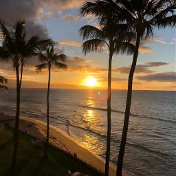 sunset beach palmtrees