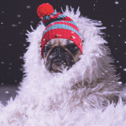 freetoedit dog cold winter angry