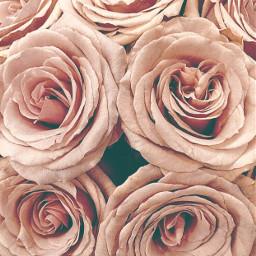 flowers roses naturesbeauty flowerbouquet closeupphotography freetoedit