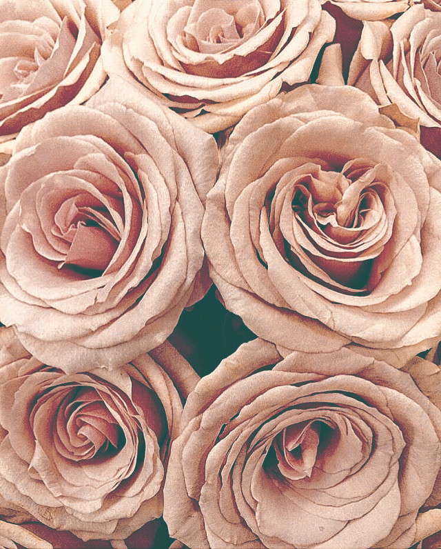 #flowers #roses #naturesbeauty #flowerbouquet #closeupphotography  #freetoedit
