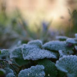 myphoto kinora lovenature coldday november