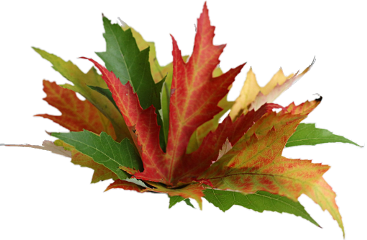 leaves autumn colors freetoedit