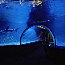 freetoedit sharks tank aquarium blue
